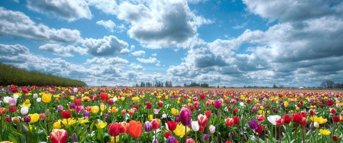 HEEL opleidingen tulpenveld