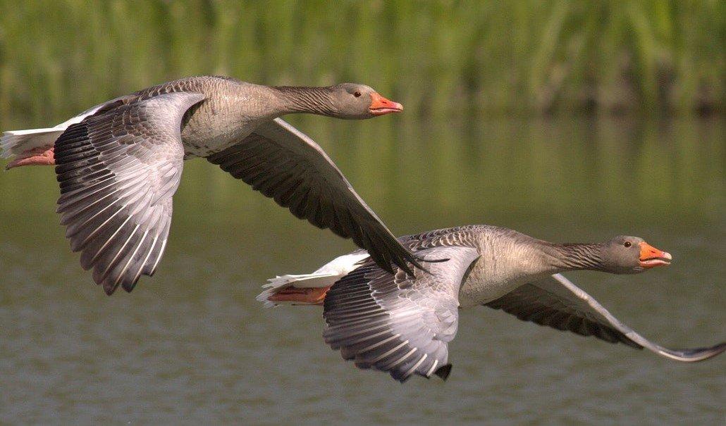 teamontwikkeling-twee-vliegende-ganzen