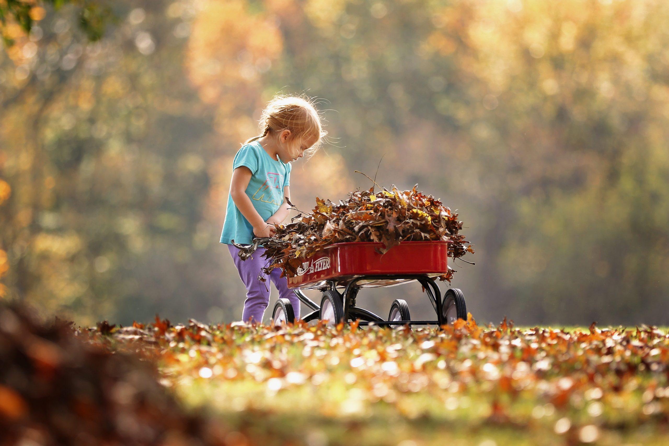 geluk meisje met herfstbladeren in een kruiwagentje