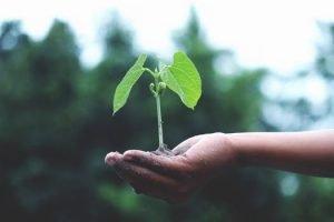 persoonlijke groei plantje op hand
