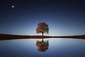 Starr-reflectie-boom-weerspiegelt-in-water