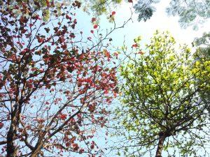 veranderen bomen met verschillende kleuren blad