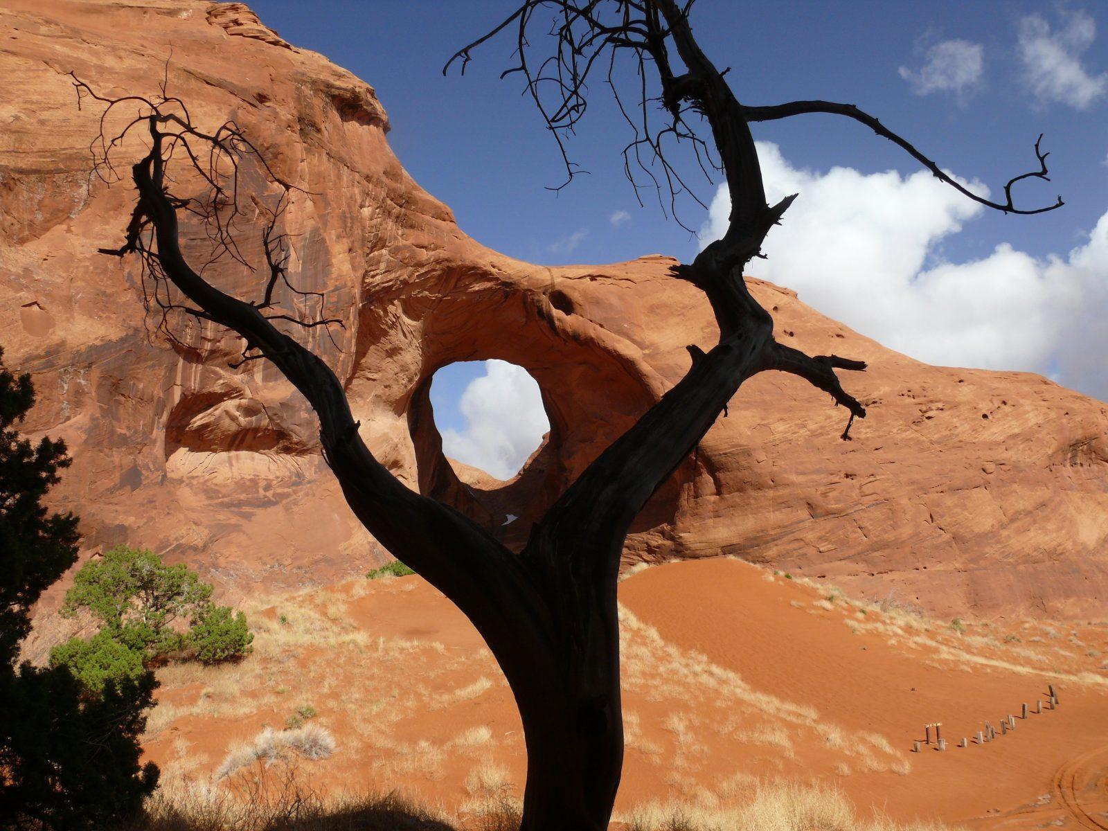 boom en rots in vorm luisterend oor
