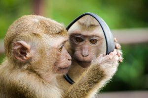 zelfreflectie aapje kijkt in spiegel